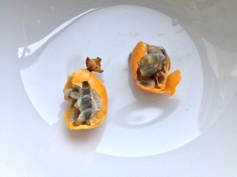 inside the passion fruit